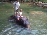 Ксю купается со слонами